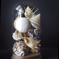 COQUILLAGES DE COLLECTION SOUS GLOBE / SOUS VERRE (N°3)