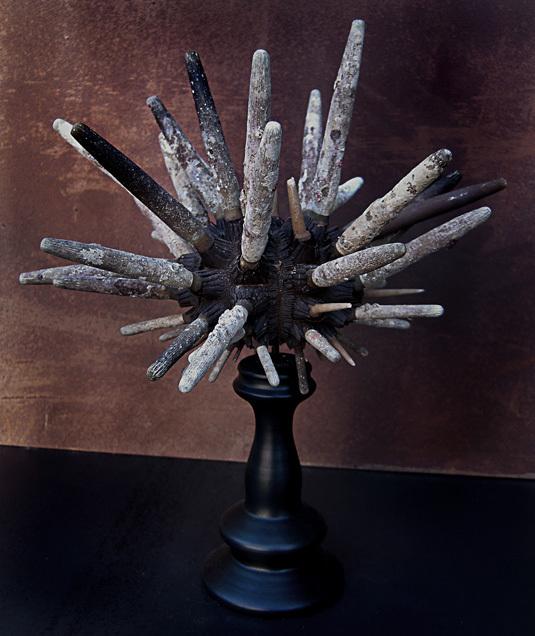 OURSIN CRAYON / BAGUETTE (phyllacanthus imperialis) SUR SOCLE